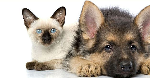 dog-and-cat_qctpqg